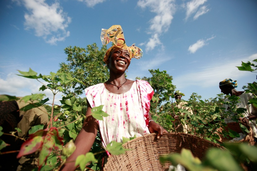 african-cotton
